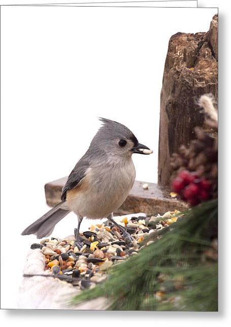 Holiday Bird Greeting Card by Marty Maynard