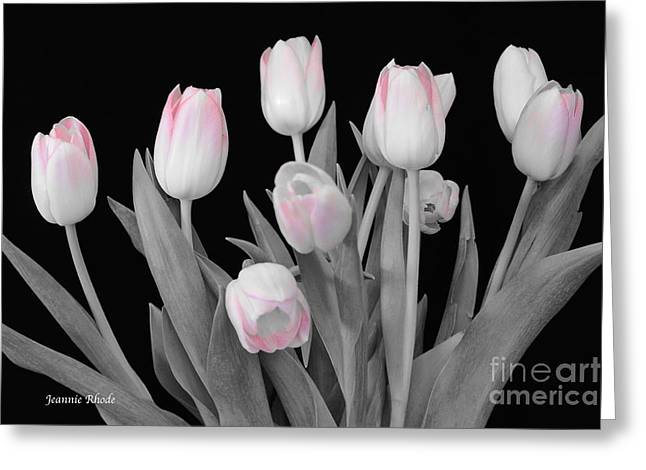 Greeting Card featuring the photograph Holland Tulips In Black And White With Pink by Jeannie Rhode