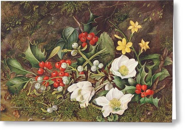 Holly And Christmas Roses Greeting Card by Jane Taylor