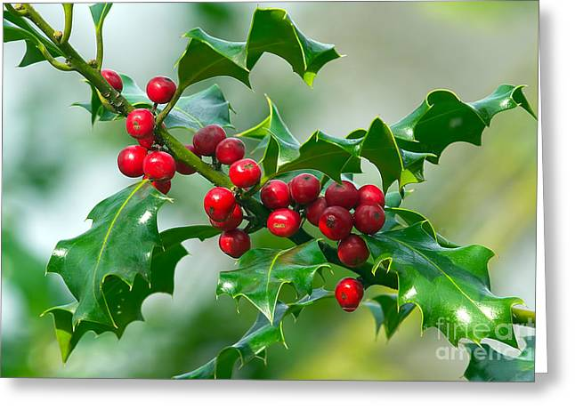 Holly Berries Greeting Card by Sharon Talson