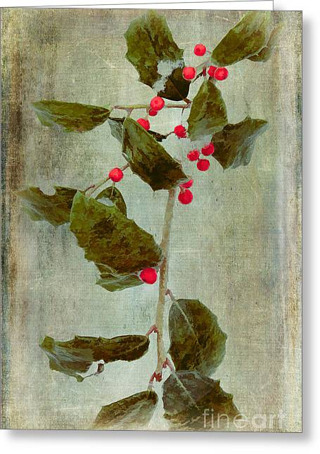 Holly Branch With Red Berries Greeting Card by Dan Carmichael