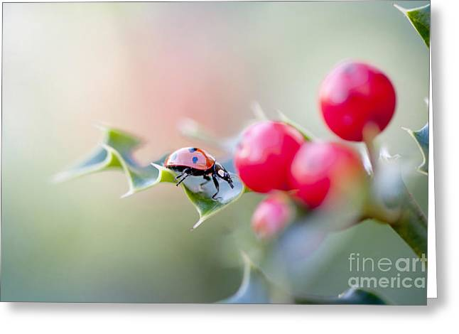 Holly Lady Greeting Card by Jacky Parker