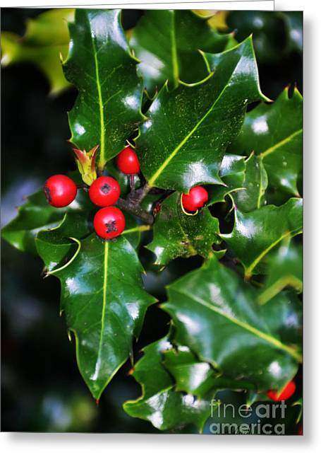 Greeting Card featuring the photograph Holly by Mindy Bench