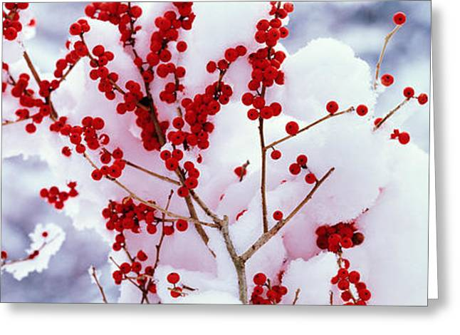 Holly Trees Kyoto Keihoku-cho Japan Greeting Card by Panoramic Images