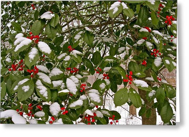 Holly - Winter Greeting Card