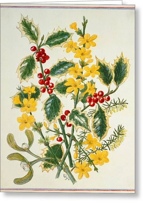 Holly, Winter Jasmine, Heath And Mistletoe Wc On Paper Greeting Card by Ursula Hodgson