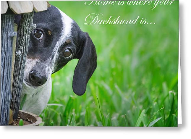 Home Is Where Your Dachshund Is Greeting Card by Mark Andrew Thomas