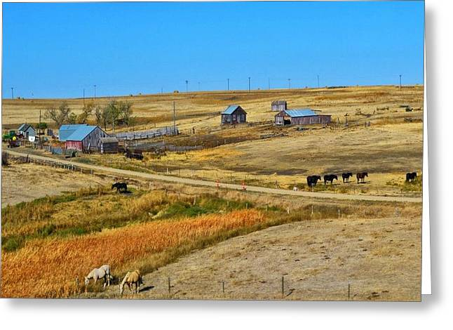 Greeting Card featuring the photograph Home On The Range by Kelly Reber