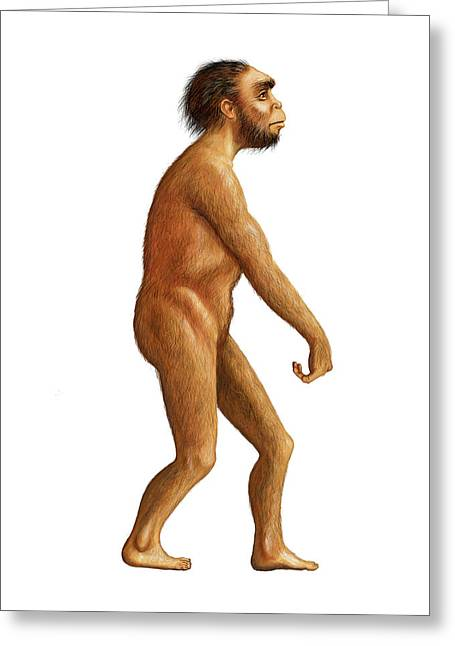 Homo Naledi Greeting Card