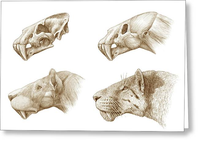 Homotherium Sabre-toothed Cat Greeting Card