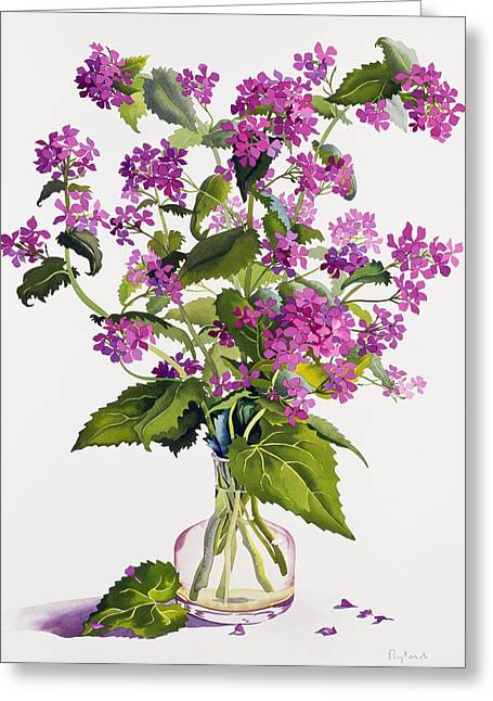 Honesty Greeting Card by Christopher Ryland