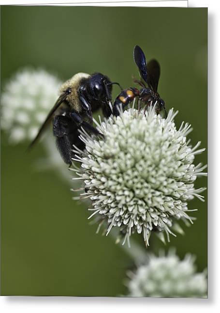 Honey Bee 0001 Greeting Card