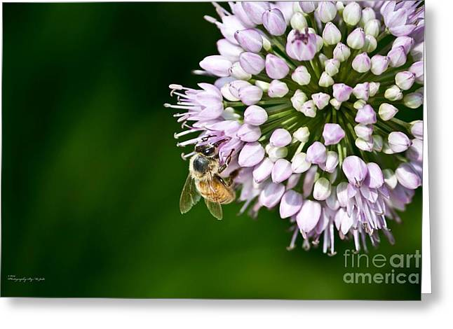 Honey Bee And Lavender Flower Greeting Card