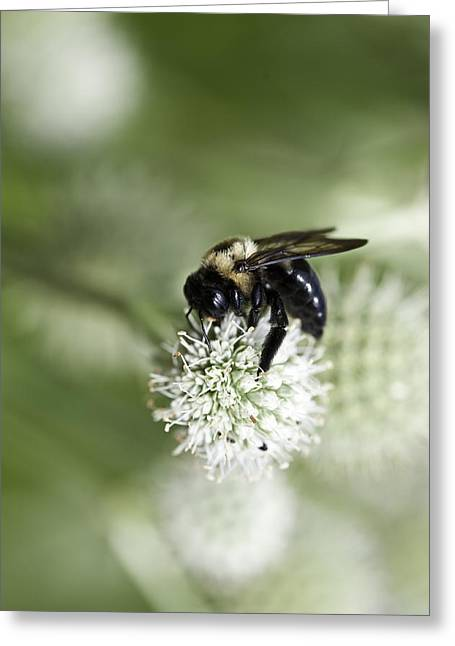 Honey Bee At Work Greeting Card