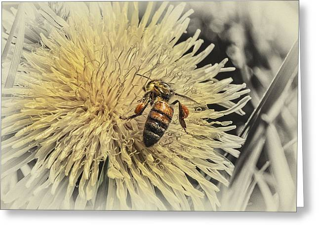 Honey Bee Meets Dandy Lion Greeting Card
