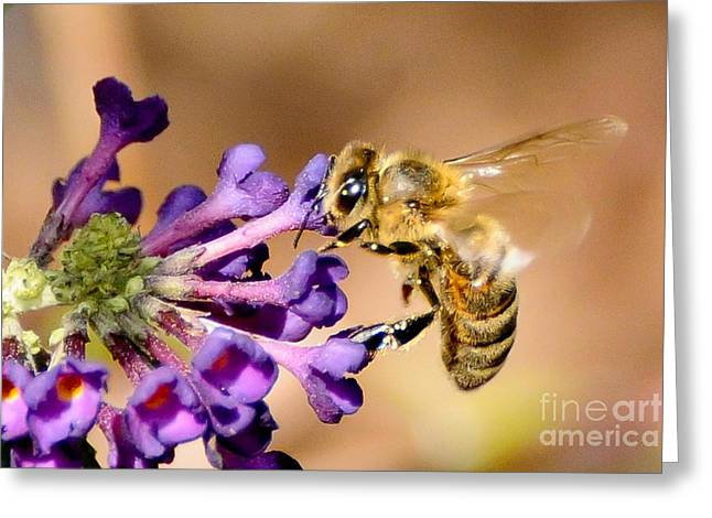 Honey Bee On Butterfly Bush Greeting Card by Jean A Chang