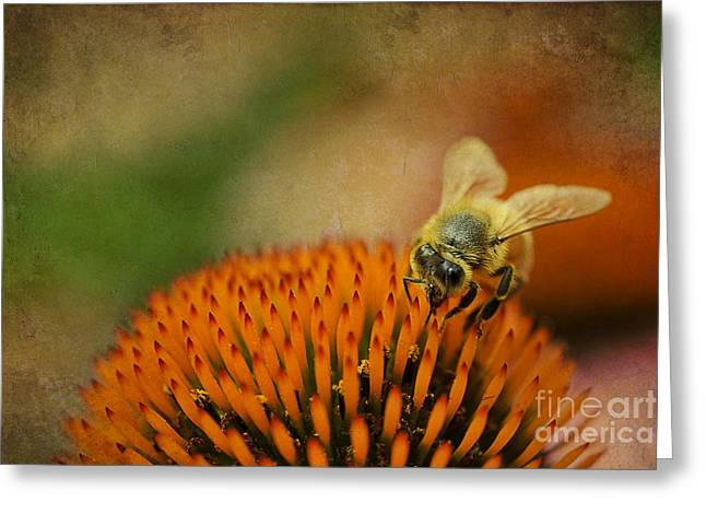 Honey Bee On Flower Greeting Card by Dan Friend