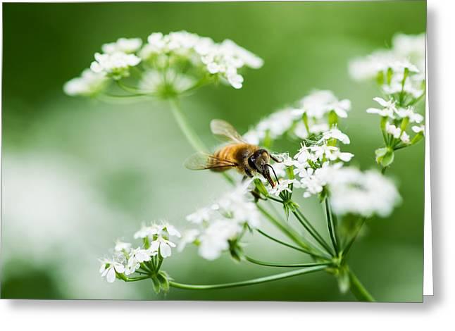 Honey Season Greeting Card by Alexander Senin