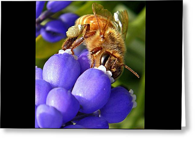 Honeybee And Muscari Greeting Card