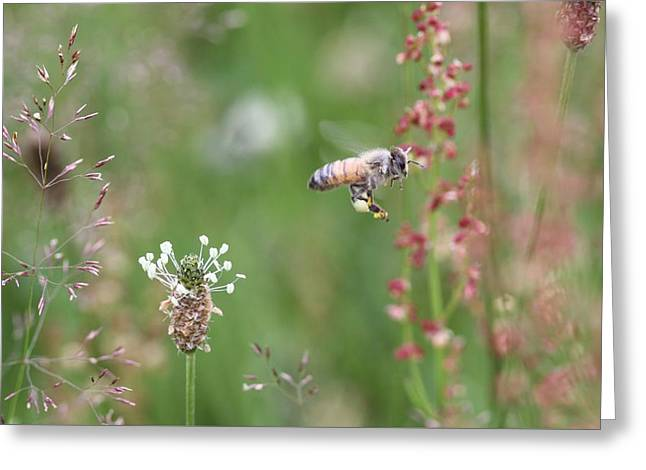Honeybee Flying In A Meadow Greeting Card