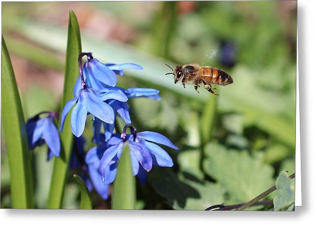 Honeybee In Flight Greeting Card