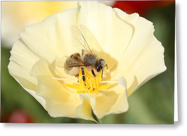 Honeybee On Cream Poppy Greeting Card