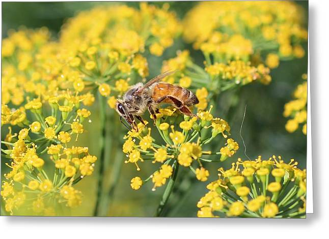Honeybee On Dill Greeting Card