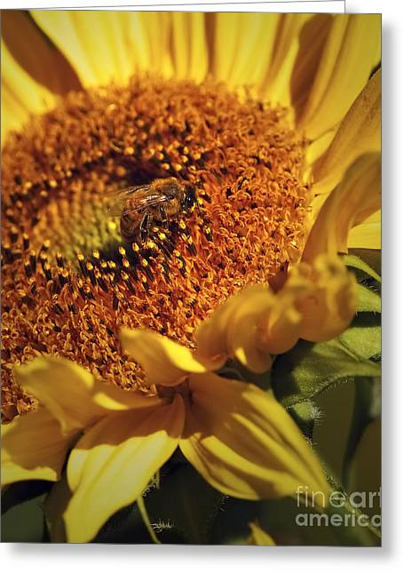Honeybee On Sunflower Greeting Card by Sharon Talson