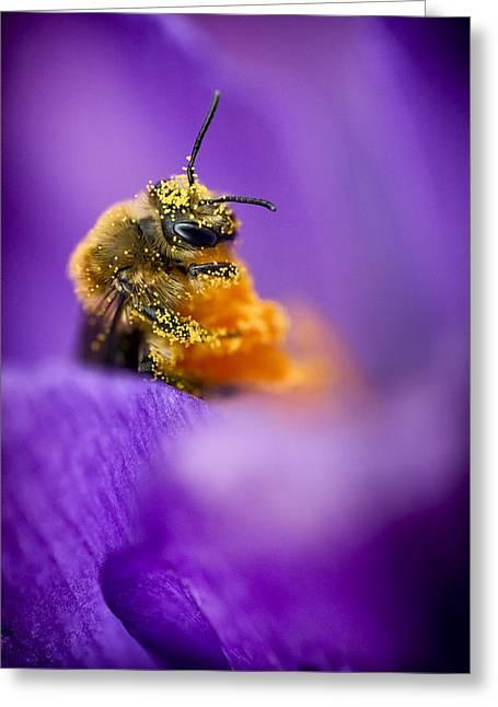 Honeybee Pollinating Crocus Flower Greeting Card by Adam Romanowicz