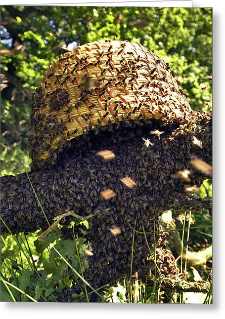 Honeybees Swarming Greeting Card