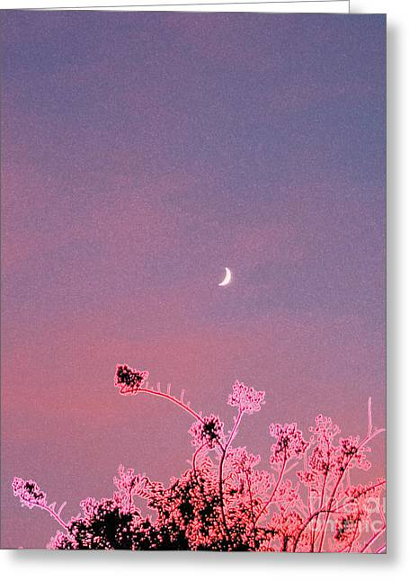 Honeymoon By Jrr Greeting Card
