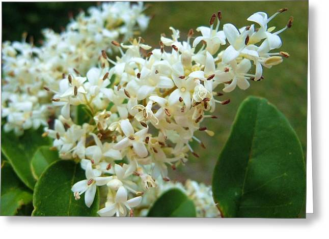 Greeting Card featuring the photograph Honeysuckle #1 by Robert ONeil