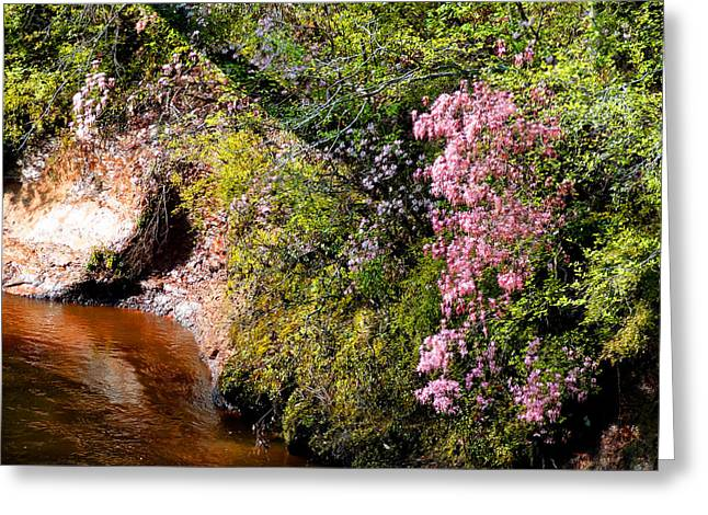 Greeting Card featuring the photograph Honeysuckle On Buckatunna Creek by Lanita Williams