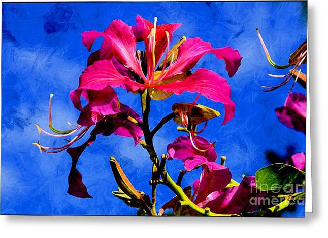 Hong Kong Orchids Greeting Card by Elaine Manley