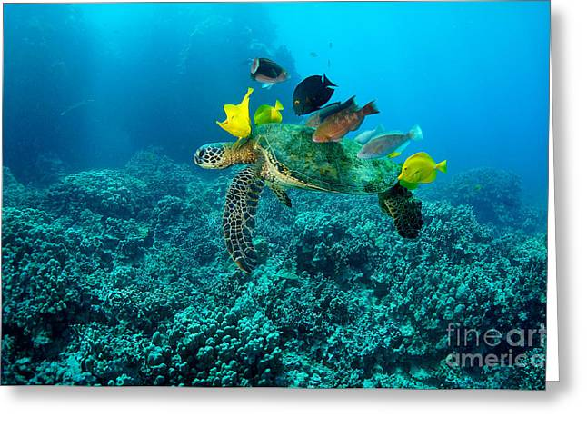 Honu Cleaning Station Greeting Card