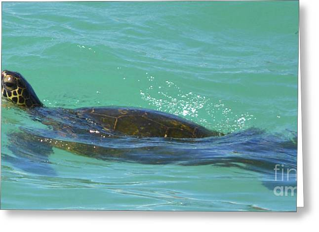 Honu II Greeting Card by Suzette Kallen