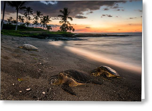 Honu Sunset Greeting Card by Robert Yone