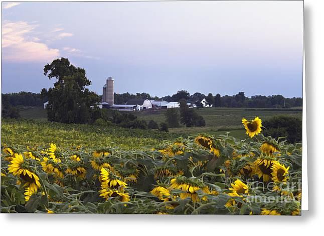 Hoosier Farm - D008560 Greeting Card by Daniel Dempster