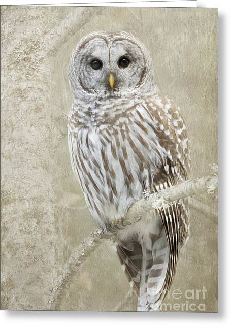 Hoot Hoot Hoot  Greeting Card
