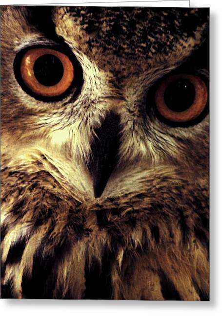 Hoot Owl Greeting Card by Alfredo Martinez