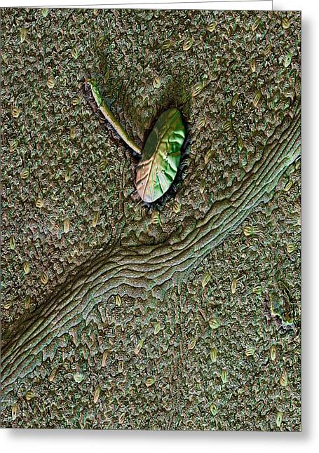 Hop Leaf Trichome And Vein Greeting Card by Stefan Diller