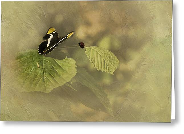 Hop On My Back My Lady And We Will Fly Far Far Away Greeting Card