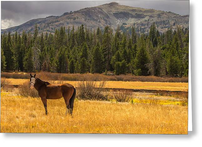 Hope Valley Horse Greeting Card