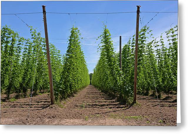 Hops Crop Field In Willamette Valley Greeting Card by Panoramic Images