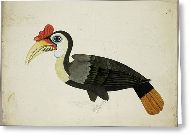 Hornbill Greeting Card by British Library