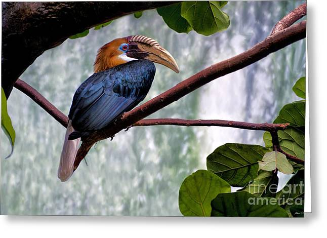 Hornbill In Paradise Greeting Card by Adam Olsen