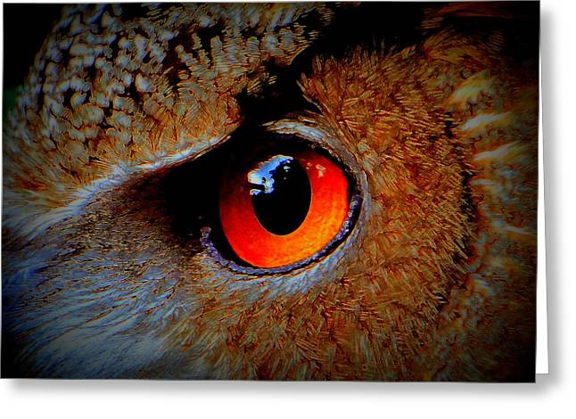 Horned Owl Eye Greeting Card