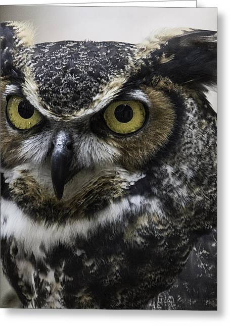 Horned Owl Greeting Card