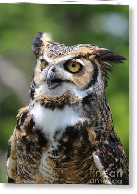 Horned Owl Greeting Card by Joseph Marquis