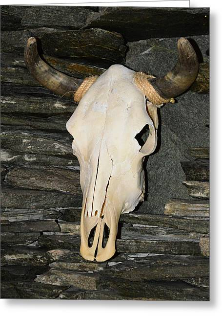 Horned Skull Greeting Card by T C Brown